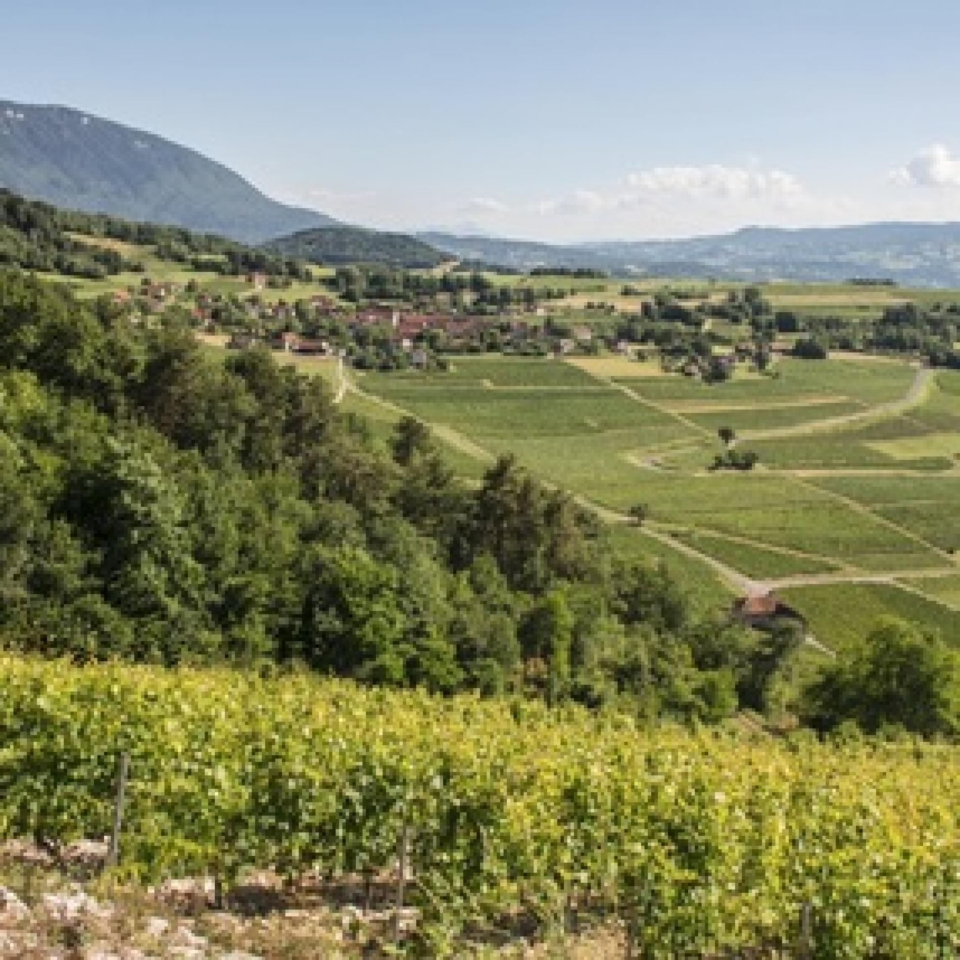 Découvrez la région Auvergne-Rhône-Alpes